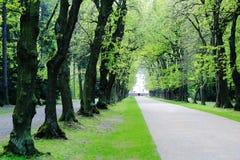 Weg van vergankelijke eiken bomen in park Stock Foto