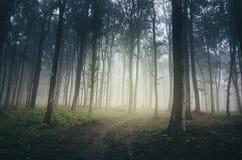 Weg in verrukt bos met mist stock afbeelding