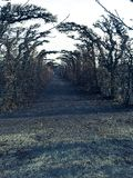 Weg von Bäumen im Fall Stockbild