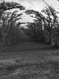Weg von Bäumen im Fall Lizenzfreies Stockbild