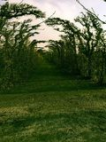 Weg von Bäumen im Fall Stockfoto