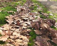 Weg von Blättern auf dem Rasen lizenzfreies stockbild