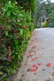 Weg von Blumenblättern stockbild