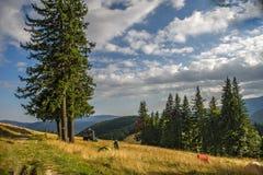 Weg von der Straße, die in den Bergen kampiert Lizenzfreie Stockfotos