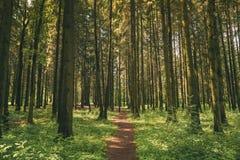 Weg, Weg, Gehweg, Weise für das Gehen in Sommer Misch-Forest Between Woods Trees Lizenzfreie Stockfotos