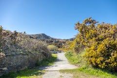Weg am Wellenbrecher-Nationalpark auf Anglesey in Wales - Vereinigtem Königreich stockfotografie