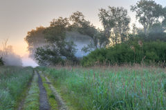 Weg wilde vegetatie Stock Afbeelding