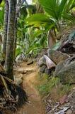 Weg in wildernis Stock Fotografie