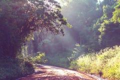 Weg in wildernis Stock Afbeelding