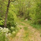 Weg in woods_01 Royalty-vrije Stock Afbeelding