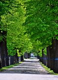 Weg in Zentralfriedhof, Wien Stock Afbeeldingen