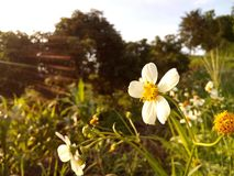 Weg zijbloemen Stock Foto