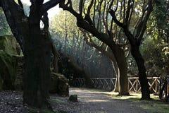 Weg, zonnestraal, boom, blad, tak, Italië Stock Foto