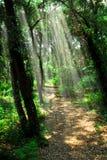 Weg in zonovergoten bos Royalty-vrije Stock Fotografie