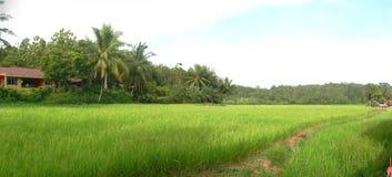Weg zu den ricefields Stockbilder