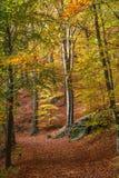 Weg zu Koenigstein u. zu x28; Konigstein& x29; Festung durch den Wald Stockbilder