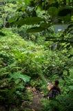 Weg zu Wasserfall Dusun Kuning auf Bali Lizenzfreies Stockbild