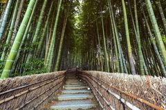 Weg zum Bambuswald, Arashiyama, Lizenzfreie Stockfotos
