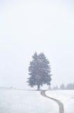 Weg zum Baum und zu den Schneefällen Stockfotos