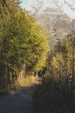 Weg zum Berg im Herbstbaumwald lizenzfreies stockfoto