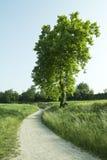 Weg zur Natur Lizenzfreies Stockbild