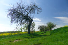 Weg zwischen Bäumen Lizenzfreie Stockbilder