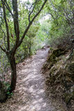 Weg zwischen Bäumen im Nationalpark nahe der Stadt Nesher Stockfotografie