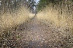 Weg zwischen dem goldenen farbigen Gras, das große Perspektive im Th gibt Lizenzfreies Stockfoto