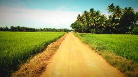 Weg zwischen Feld Stockbild