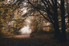 Wegabflussrinne der Wald im Herbst stockbild