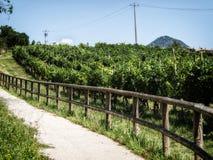 Wegabflussrinne die Weinberge lizenzfreie stockbilder