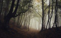 Wegabflussrinne ein dunkler mysteriöser Wald mit Nebel im Herbst Lizenzfreie Stockfotos