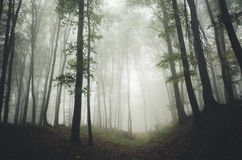 Wegabflussrinne ein mysteriöser Wald lizenzfreies stockbild