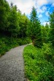Wegbaum im Wald auf der Grenze Stockbilder