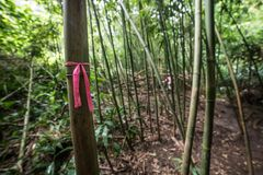 Wegbaum markiert auf dem Bambushinterwaldwandern lizenzfreies stockfoto