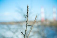 Wegdornniederlassung mit den Knospen auf einem Hintergrund des Flusses stockfotografie