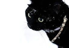Wege der schwarzen Katze auf dem Schnee Stockbild