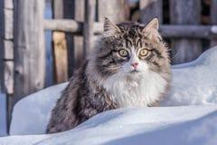 Wege einer Landkatze in der Natur auf dem Schnee an einem sonnigen Tag Stockfoto