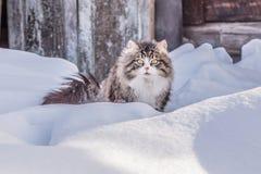 Wege einer Landkatze in der Natur auf dem Schnee an einem sonnigen Tag Lizenzfreies Stockbild