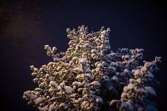 Wege um die Stadt: der schöne ausgezeichnete Schneetannenbaum steht aloone nachts, beleuchtet mit einer Lampe, während der Schnee Lizenzfreie Stockfotos