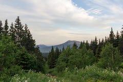 Wege zwischen Wäldern und Bergen der Süd-Urals Sommer in den Bergen Ansicht von den Bergen Die Natur des Sou Lizenzfreies Stockbild