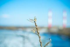 Wegedoorntak met knoppen op een achtergrond van de rivier Stock Fotografie