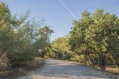 Wegen tussen bomen Stock Fotografie