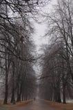 Wegführungen im nebeligen Park des Herbstes Lizenzfreie Stockfotos