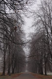 Wegführungen im nebeligen Park des Herbstes Stockbild