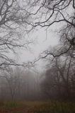 Wegführungen im nebeligen Wald des Herbstes Lizenzfreies Stockfoto