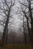 Wegführungen im nebeligen Wald des Herbstes Stockfotografie