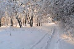 Weggassenpark des Winters sonniger Tagesfrosen Bäume, die Büsche Hoarfrost schneien lizenzfreies stockfoto