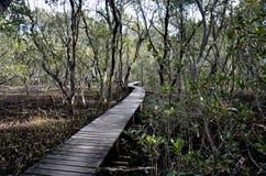 Weggehweg hergestellt vom Holz entlang schlammiger Bank von Fluss Stockbilder