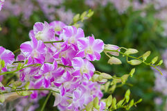 Weggeschoten orchideebloemen Mooie Orchidee Royalty-vrije Stock Foto's